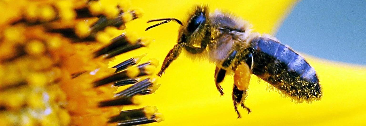 Willkommen beim Bienenzuchtverein oberes Aaretal
